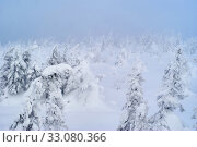 Snowy wooded mountain pass during a snowstorm. Стоковое фото, фотограф Евгений Харитонов / Фотобанк Лори