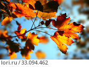 Купить «Autumn background», фото № 33094462, снято 31 марта 2020 г. (c) PantherMedia / Фотобанк Лори