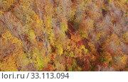 Купить «Aerial view of autumn forest. Colorful trees aerial view», видеоролик № 33113094, снято 19 октября 2019 г. (c) Яков Филимонов / Фотобанк Лори