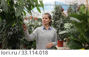 Купить «Female owner of garden center standing in nursery shop with potted plants», видеоролик № 33114018, снято 8 ноября 2019 г. (c) Яков Филимонов / Фотобанк Лори