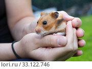 hamster protection. Стоковое фото, фотограф Rudolf Friederich / PantherMedia / Фотобанк Лори