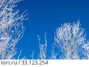 Купить «Closeup of branches of a snow winter tree», фото № 33123254, снято 19 февраля 2020 г. (c) PantherMedia / Фотобанк Лори