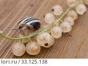 Купить «snail plague», фото № 33125138, снято 29 февраля 2020 г. (c) PantherMedia / Фотобанк Лори