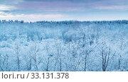 Зимние деревья под утренним небом на рассвете. Стоковое видео, видеограф Beerkoff / Фотобанк Лори