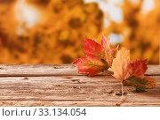 Купить «Two autumn leaves on a rustic table outdoors», фото № 33134054, снято 7 июля 2020 г. (c) PantherMedia / Фотобанк Лори