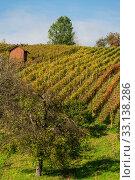 Купить «Vine landscape», фото № 33138286, снято 26 февраля 2020 г. (c) PantherMedia / Фотобанк Лори