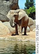 Купить «African elephant in natural environment.», фото № 33150266, снято 21 февраля 2020 г. (c) PantherMedia / Фотобанк Лори