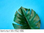 Купить «close up of monstera deliciosa leaf», фото № 33152186, снято 16 ноября 2018 г. (c) Syda Productions / Фотобанк Лори