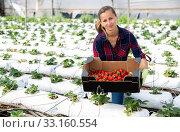 Fine female farmer working in greenhouse. Стоковое фото, фотограф Яков Филимонов / Фотобанк Лори