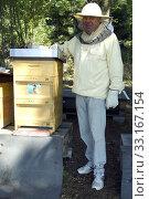 Купить «Honigbienen, Biene; Apis; mellifera», фото № 33167154, снято 28 мая 2020 г. (c) PantherMedia / Фотобанк Лори