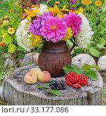 Купить «Осенний натюрморт из садовых цветов, яблок, ягод калины и черноплодной рябины на старом пне в саду», фото № 33177086, снято 13 августа 2019 г. (c) Елена Коромыслова / Фотобанк Лори