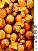 Купить «autumn - chestnuts,acorns,leaves,nuts», фото № 33188154, снято 5 июля 2020 г. (c) PantherMedia / Фотобанк Лори