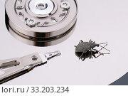Купить «Жук скосарь на поверхности компьютерного жесткого диска. Иллюстрация дисковой ошибки», фото № 33203234, снято 11 февраля 2020 г. (c) Игорь Долгов / Фотобанк Лори