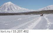 Female mushing sled dog team, running on snow distance Sled Dog Race Competition. Редакционное видео, видеограф А. А. Пирагис / Фотобанк Лори