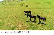 Купить «Flight over wild horses herd on mountain meadow. Summer mountains wild nature. Freedom ecology concept.», видеоролик № 33207458, снято 28 июля 2018 г. (c) Александр Маркин / Фотобанк Лори