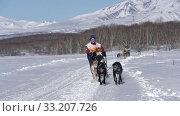 Girl mushing sled dog team, running on snow distance Sled Dog Race Competition. Редакционное видео, видеограф А. А. Пирагис / Фотобанк Лори