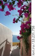 Купить «view over small oia village on santorini island», фото № 33231758, снято 4 апреля 2020 г. (c) PantherMedia / Фотобанк Лори