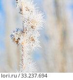 Купить «Winter Hoar Frost Macro», фото № 33237694, снято 27 мая 2020 г. (c) PantherMedia / Фотобанк Лори