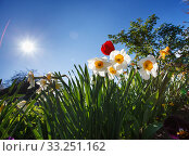 Купить «blossom flower garden in spring», фото № 33251162, снято 29 февраля 2020 г. (c) PantherMedia / Фотобанк Лори