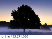 Купить «Red deer (Cervus elaphus) at dusk with silhouetted tree, Richmond Park, London, England, UK. October.», фото № 33271050, снято 11 июля 2020 г. (c) Nature Picture Library / Фотобанк Лори