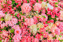 Купить «Abstract background of flowers. Close-up.», фото № 33278210, снято 29 февраля 2020 г. (c) easy Fotostock / Фотобанк Лори