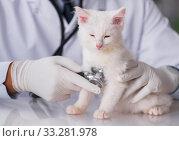 Купить «White kitten visiting vet for check up», фото № 33281978, снято 9 ноября 2016 г. (c) Elnur / Фотобанк Лори