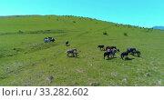 Купить «Flight over wild horses herd on mountain meadow. Summer mountains wild nature. Freedom ecology concept.», видеоролик № 33282602, снято 28 июля 2018 г. (c) Александр Маркин / Фотобанк Лори