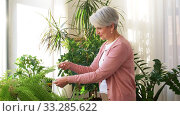 Купить «senior woman takes care of houseplant at home», видеоролик № 33285622, снято 19 января 2020 г. (c) Syda Productions / Фотобанк Лори