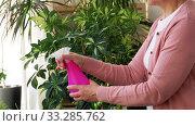 Купить «happy senior woman spraying houseplants at home», видеоролик № 33285762, снято 19 января 2020 г. (c) Syda Productions / Фотобанк Лори