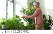 happy senior woman cleaning houseplant. Стоковое видео, видеограф Syda Productions / Фотобанк Лори