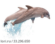 Grey dolphins isolated. Стоковое фото, фотограф Яков Филимонов / Фотобанк Лори