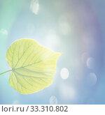 green leaf in spring. Стоковое фото, фотограф Stefan Papp / PantherMedia / Фотобанк Лори