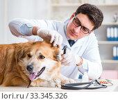 Купить «Doctor examining golden retriever dog in vet clinic», фото № 33345326, снято 5 марта 2018 г. (c) Elnur / Фотобанк Лори