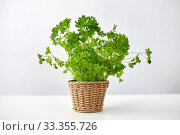 Купить «green parsley herb in wicker basket on table», фото № 33355726, снято 12 июля 2018 г. (c) Syda Productions / Фотобанк Лори