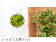 herbal tea with fresh peppermint on wooden board. Стоковое фото, фотограф Syda Productions / Фотобанк Лори