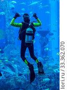 Купить «DUBAI, UAE - SEPTEMBER 30: Large aquarium in Hotel Atlantis (1,539 spacious guest rooms including 166 suites) on man-made island of Palm Jumeirah at September 30, 2012 in Dubai, United Arab Emirates.», фото № 33362070, снято 30 сентября 2012 г. (c) age Fotostock / Фотобанк Лори