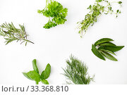 Купить «greens, spices or herbs on white background», фото № 33368810, снято 12 июля 2018 г. (c) Syda Productions / Фотобанк Лори