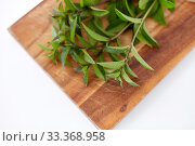 Купить «bunch of fresh peppermint on wooden cutting board», фото № 33368958, снято 12 июля 2018 г. (c) Syda Productions / Фотобанк Лори