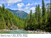 Купить «Boreal forest and shallow mountain stream», фото № 33373102, снято 15 августа 2019 г. (c) Виктор Никитин / Фотобанк Лори