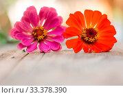 Купить «Colorful flowers lying on a rustic wooden table. Copy space.», фото № 33378390, снято 6 июня 2020 г. (c) easy Fotostock / Фотобанк Лори