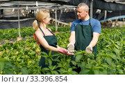 Купить «Couple of farmers cultivating white jute», фото № 33396854, снято 5 июля 2018 г. (c) Яков Филимонов / Фотобанк Лори