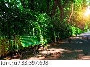 Летний сад, Санкт-Петербург. Summer landscape - colorful summer city park with deciduous green trees and bench along the alley (2019 год). Стоковое фото, фотограф Зезелина Марина / Фотобанк Лори