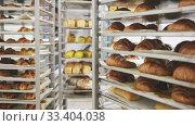 Купить «Appetizing fresh bread on rack in bakery», видеоролик № 33404038, снято 10 июля 2020 г. (c) Яков Филимонов / Фотобанк Лори
