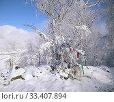 Разноцветные ленты на ветках березы в снегу на перевале Чике-Таман в Горном Алтае (2019 год). Стоковое фото, фотограф Ольга Анофриева / Фотобанк Лори