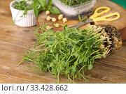 Свежая зелень,ростки гороха. Стоковое фото, фотограф Наталия Кузнецова / Фотобанк Лори