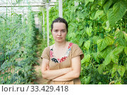 Female farmer in glasshouse. Стоковое фото, фотограф Яков Филимонов / Фотобанк Лори