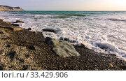 Купить «Таймлапс - волны накатывают на морской галечный пейзаж, на дальнем плане гора», видеоролик № 33429906, снято 25 марта 2020 г. (c) Иванов Алексей / Фотобанк Лори