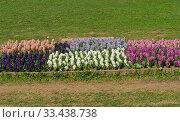 Купить «Красивые разноцветные  гиацинты под ярким весенним солнцем. Аптекарский Огород (филиал ботанического сада МГУ). Москва», фото № 33438738, снято 6 мая 2019 г. (c) Сергей Рыбин / Фотобанк Лори