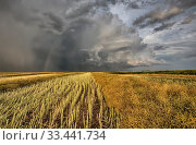 Купить «Stubble Field and Prarie Storm Canola Saskatchewan», фото № 33441734, снято 1 июня 2020 г. (c) age Fotostock / Фотобанк Лори