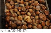 Купить «Pile of the delisious chestnuts at market place», видеоролик № 33445174, снято 14 ноября 2019 г. (c) Яков Филимонов / Фотобанк Лори
